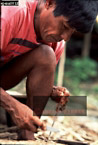 EPENA INDIANS: Preparing Poisoned Dart, Southern Colombia, 1994