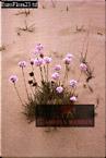 Plant Engulfed by Sand Dune, Coto De Donana, Spain