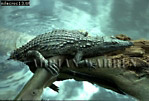 Nile Crocodile (Crocodylus niloticus), St. Lucia, South Africa