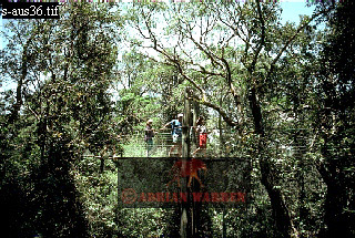 CANOPY WALKWAY, Tropical Rain Forest, Queensland, Australia