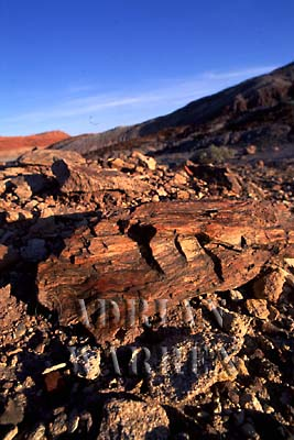 PETRIFIED WOOD, Arizona, USA