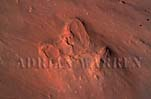 DINOSAUR'S FOOTPRINT, Arizona, USA