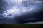 Heavy Cumulus with storm and rain curtain, Texas, USA