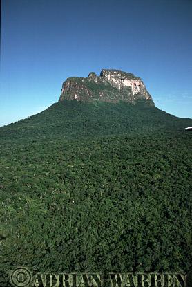 Aerials (aerial photo) of Tepuis, South America: Cerro Autana and rainforest, Venezuela