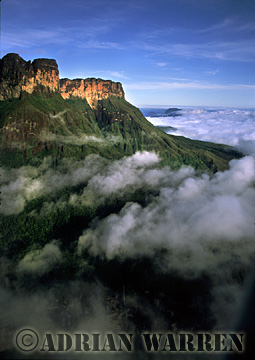 Aerials (aerial photo) of Tepuis, South America: Mount Auyantepui, with clouds Venezuela