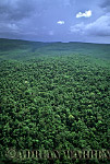 Aerials (aerial photo) of Tepuis, South America: Forest in Churun Gorge, Near Auyantepui, Venezuela
