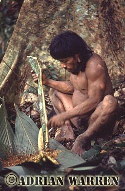 Waorani Indians : Curare Preparation, rio Cononaco, Ecuador, 1983