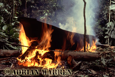 Waorani Indians : dug-out Canoe making, rio Cononaco, Ecuador, 1983
