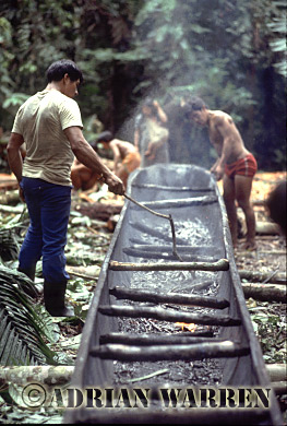 Waorani Indians : dug-out Canoe making, rio Cononaco, Ecuador, 1983
