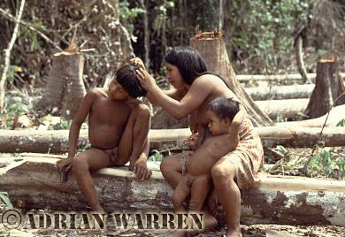Waorani Indians : family grooming, rio Cononaco, Ecuador, 1983