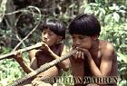 Waorani Indians : boys leaning to use Blow gun, rio Cononaco, Ecuador, 1983
