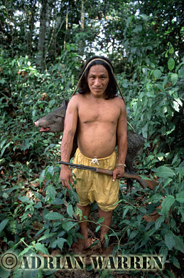 Waorani Indians : after a sucessful hunt with modern gun, Settlement near airstrip, rio Cononaco, Ecuador, 2002