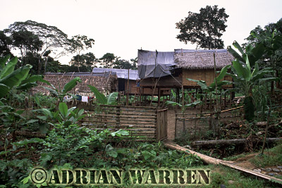 Waorani Indians : Settlement by oil company road to Gadeno, Ecuador, 2002