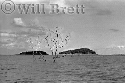 Dead Trees, Lake Kariba, Zimbabwe, 1996
