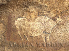Rock Painting of BUFFALO, Zululand, South Africa