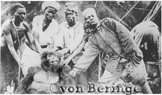 The first Mountain Gorilla (Gorilla g. beringei) discovered by Captain Robert von Beringe in 1902, with his Askaris and his manservant, Virunga Volcanoes, Rwanda