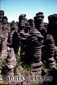 Rock Shapes, summit of Roraima