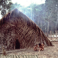 Waorani Indians, Traditional Hut, rio Cononaco, 1983