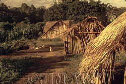 Tewaeno, 1973 Housing styles have varied in Waorani culture since pre-contact times
