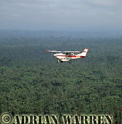 MAF Cessna 206 over the forest