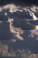 Heavy Cumulus clouds, Texas, USA